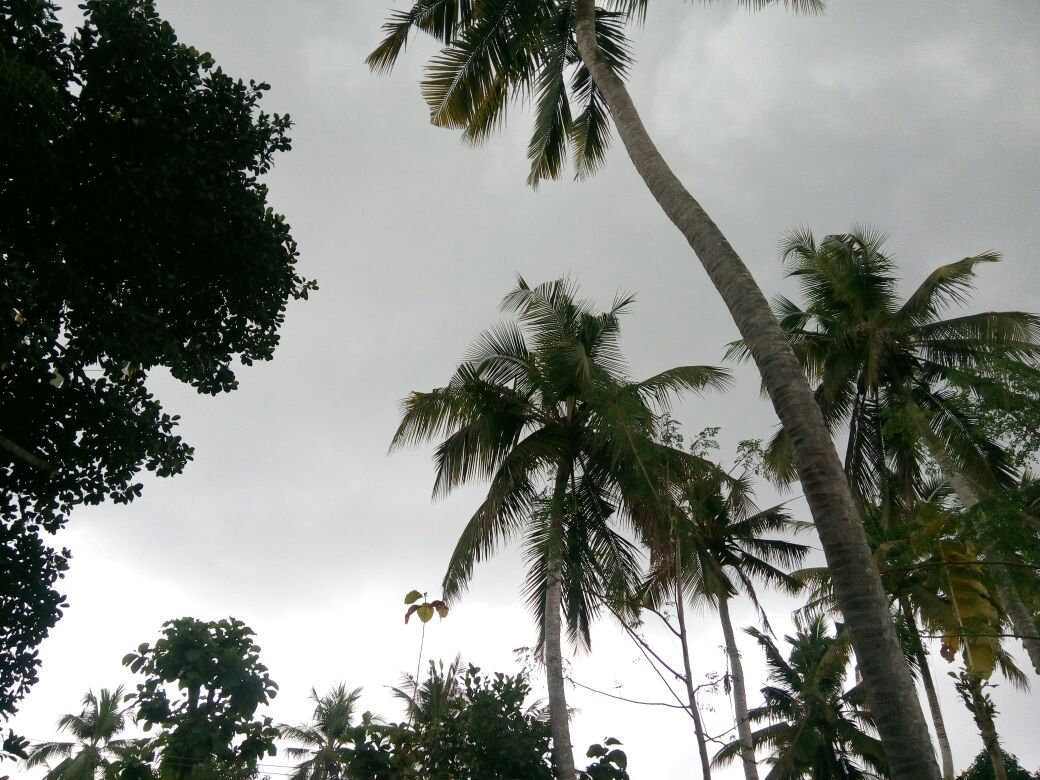 Kerala 1