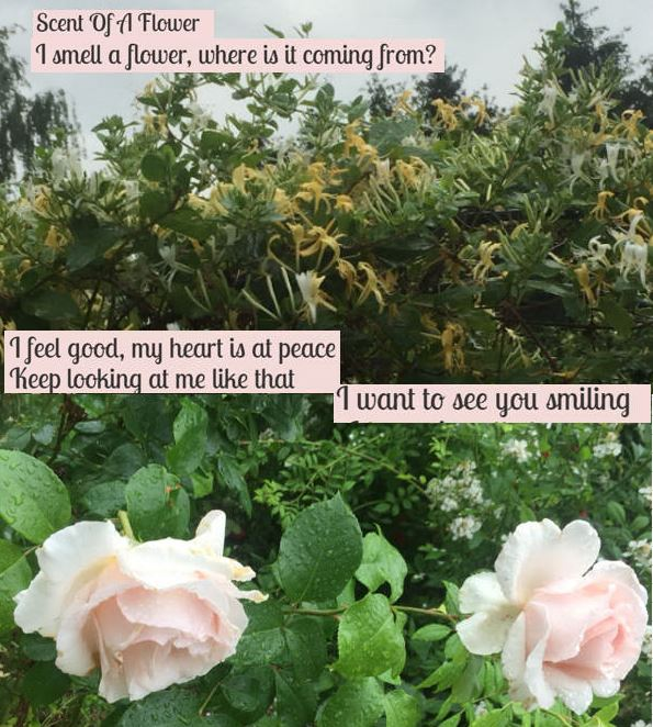 Scent of a Flower