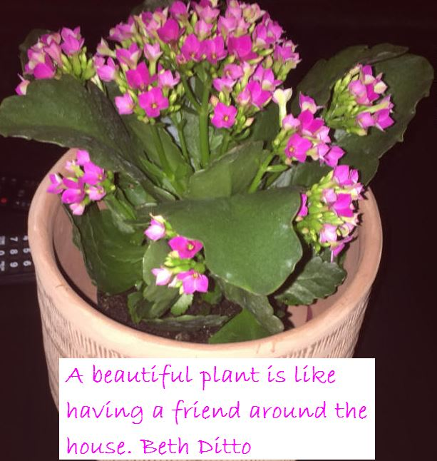 Friendship without self-interest is one of the rare and beautiful things of life. A beautiful Plant is like having a friend. Quote