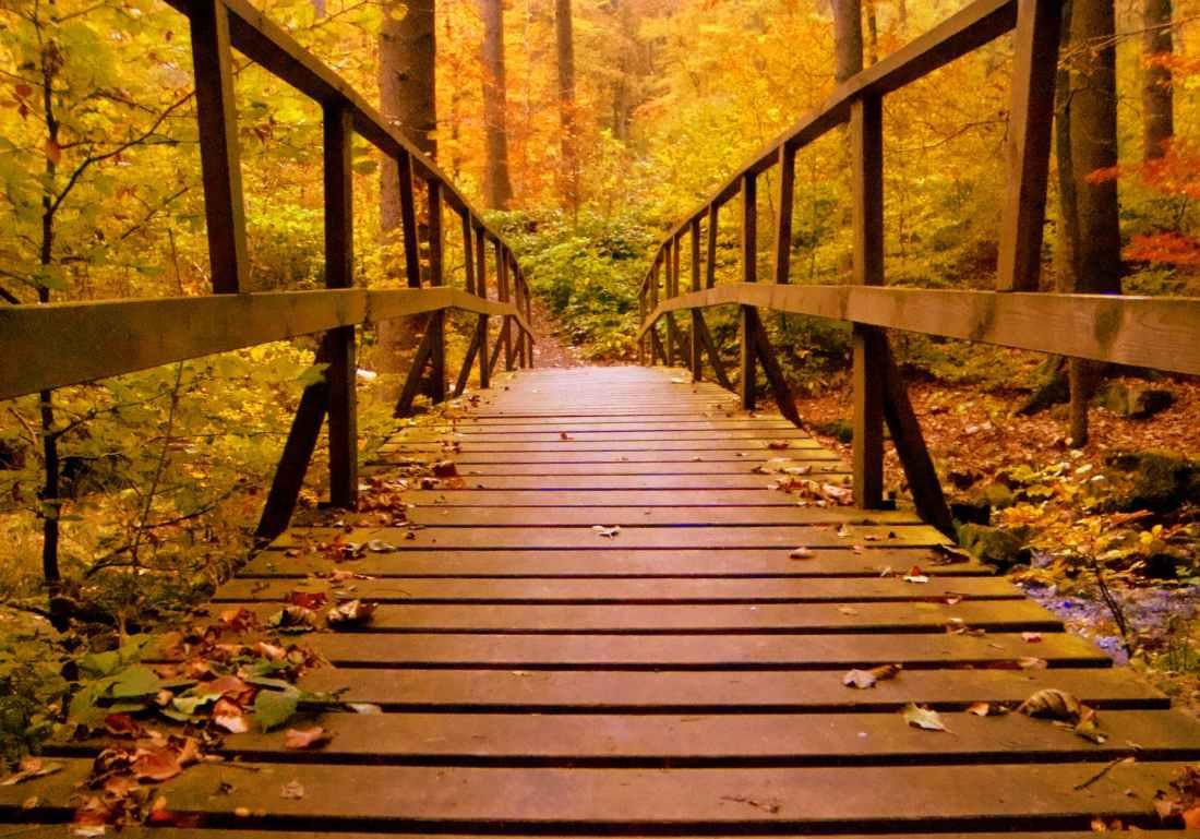 Forgiveness a Bridge to Future
